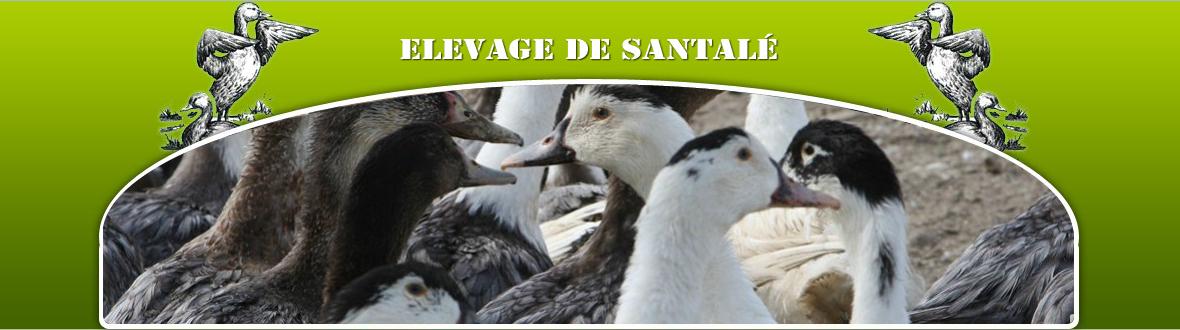 Elevage de Santalé